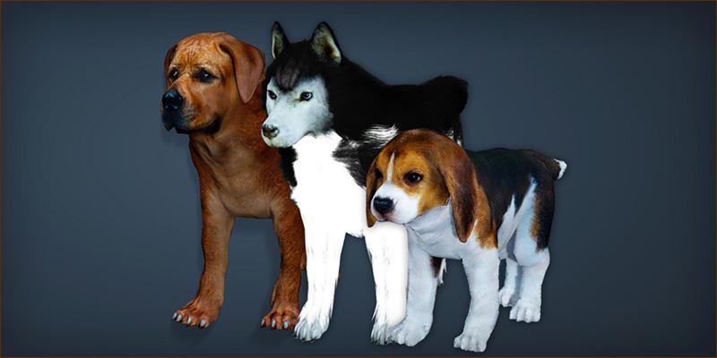 신규 애완동물 추가